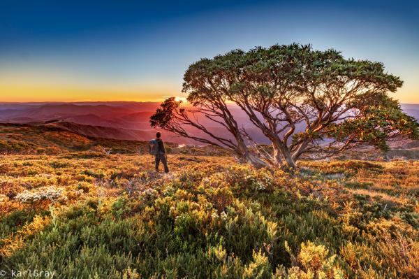 A snowgum, rolling mountains and a colourful sunset in the high country - 41