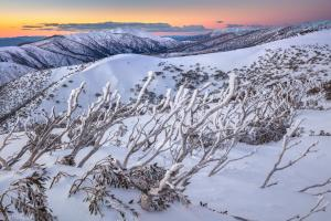Karl Gray Gallery - Frosty Sticks to Feathertop - 104